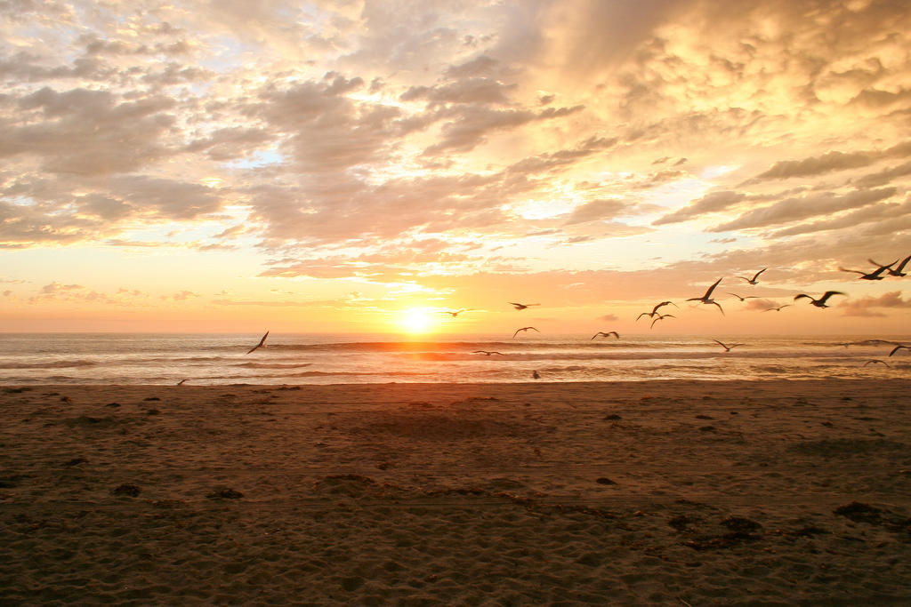 Flying Birds Sunset by ZoharBlur