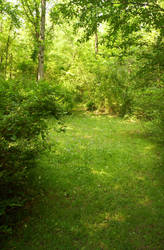Enchanted Forest Stock 4