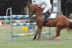 Jump Refusal Horse Stock