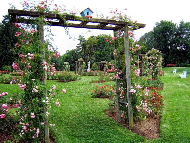 Image result for Allentown Rose Gardens