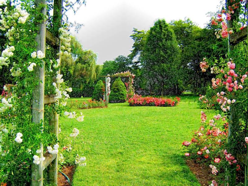 Allentown Rose Garden   52 By Art137 ...