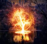 Old Tree Encounter