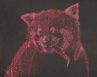 Red panda scratch art by Scythena