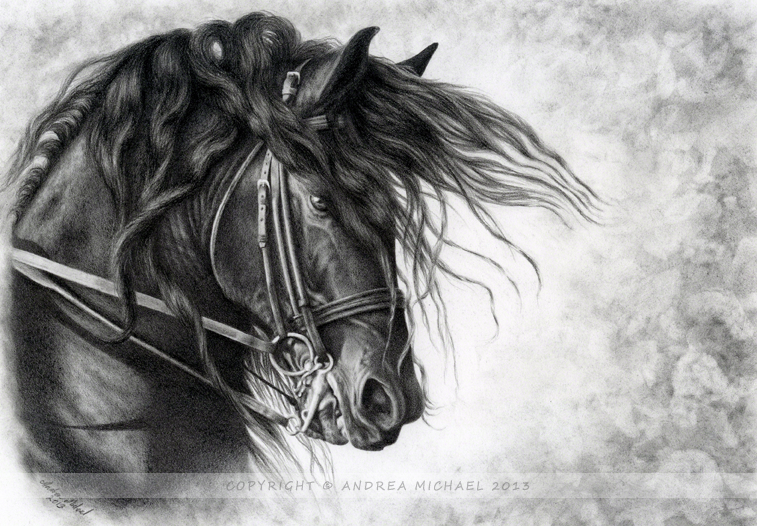 Django of Cacharel - Friesian Stallion by andreamichael