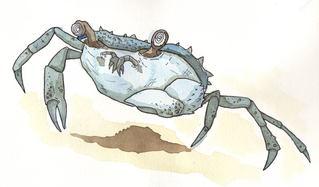 Giant Blue Crab by DarthAsparagus