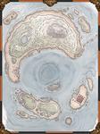 Snake Island by DarthAsparagus