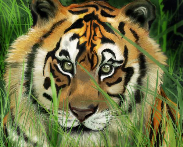 tigre by vittara