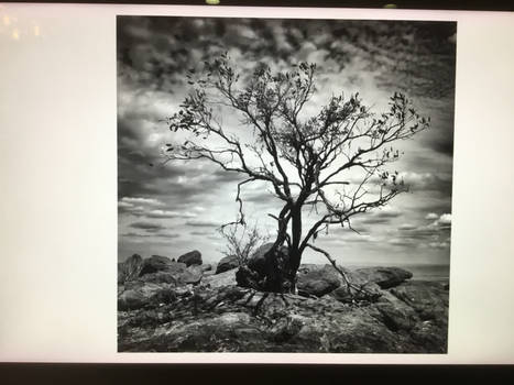 Old Lone Tree