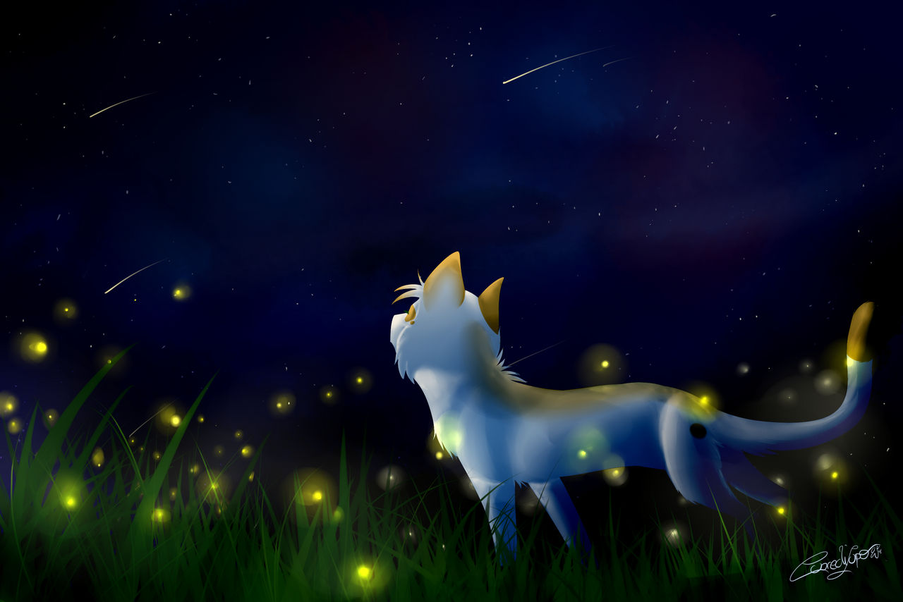 Firefly and Shooting stars