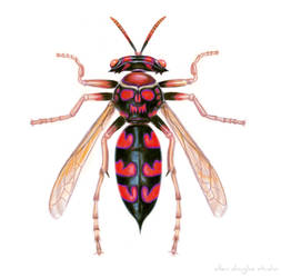 Hammerhead Wasp by allendouglasstudio