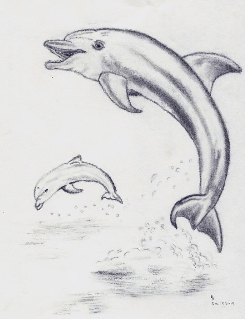 Draw Dolphins Jumping Out Of The Water Making A Heart