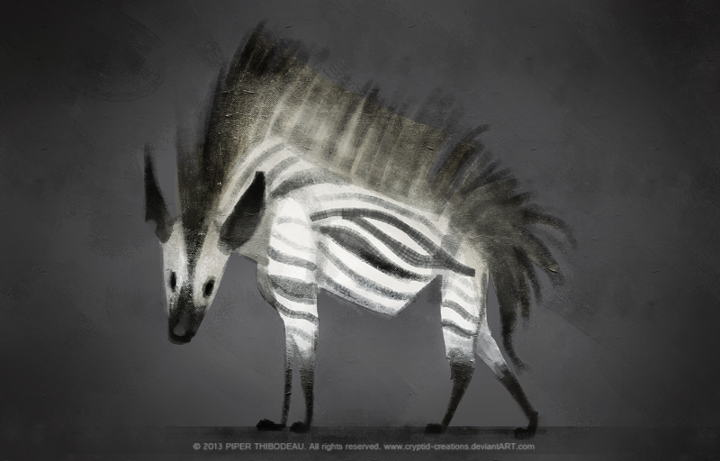 Striped hyena average height and length