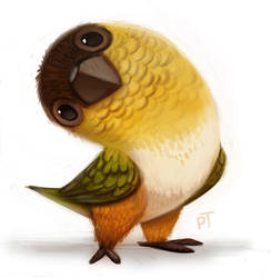 Day 590. Caique Quickie