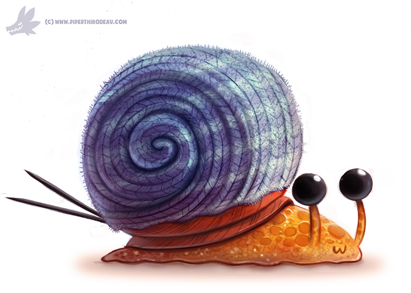 how to draw a snail shell