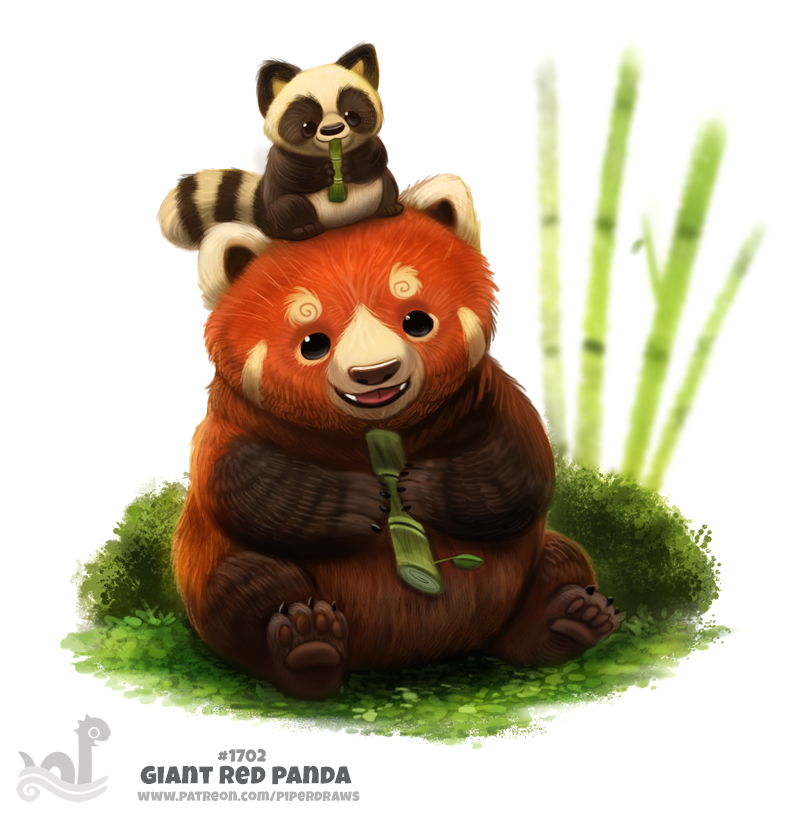 Daily Painting 1702# Giant Red Panda