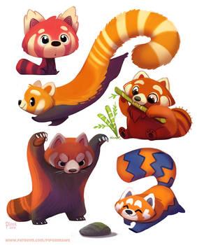 #2519. Red Panda - Designs