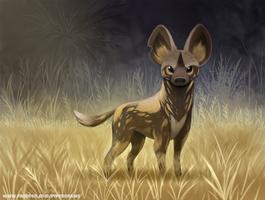 #2659. African Wild Dog - Illustration
