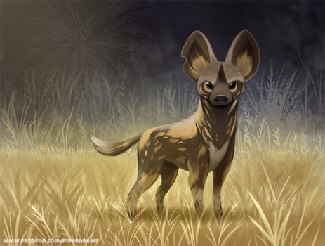 #2659. African Wild Dog - Illustration