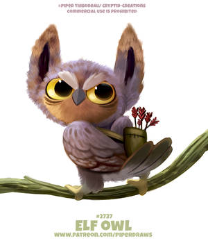 #2737. Elf Owl - Word Play