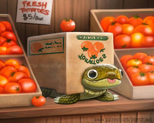 3062. Box Turtle - Illustration