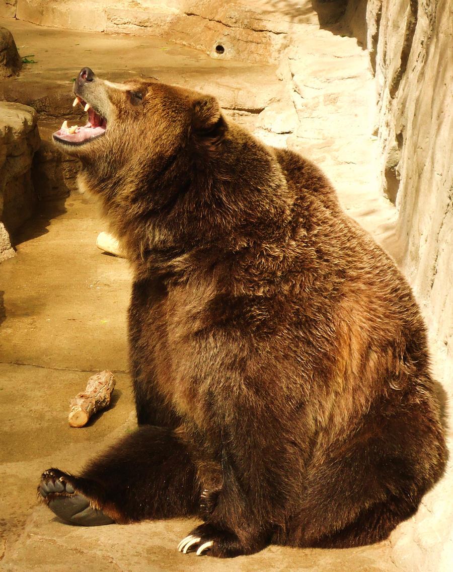 grizzly bear roar art