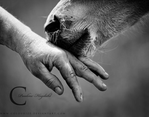 foal kisses