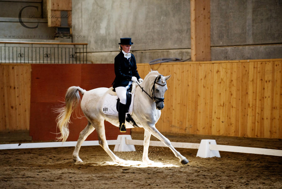 Dressage II by Colourize
