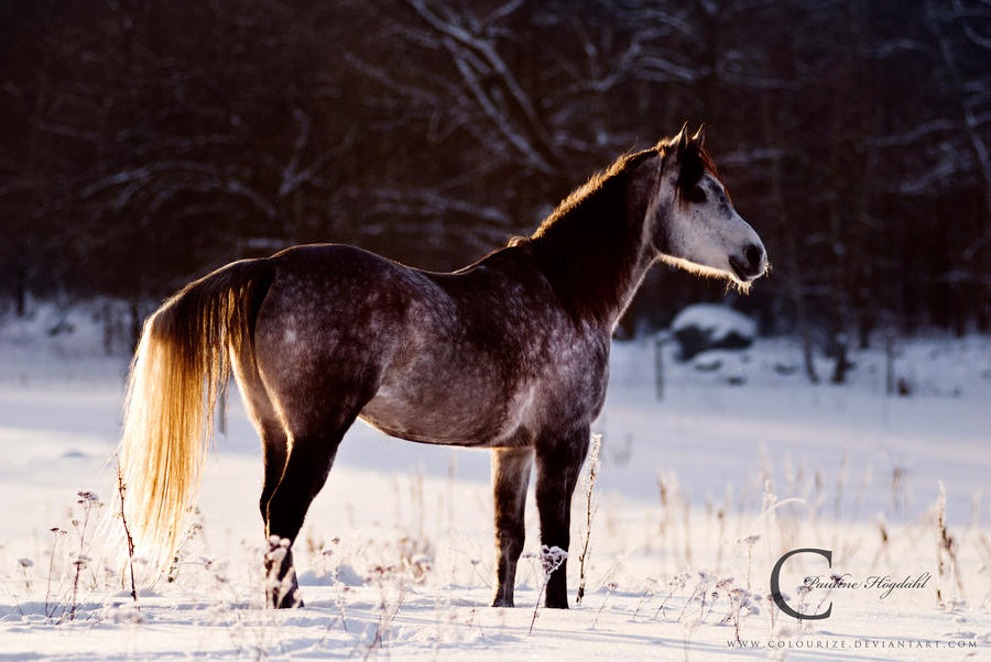 Poser by Colourize