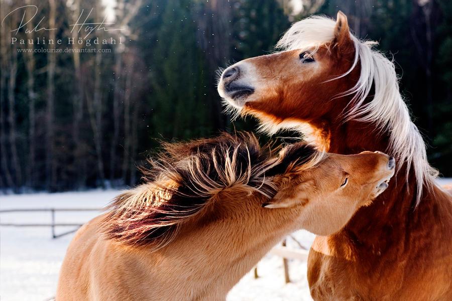 Konji I_kill_you__by_colourize-d4nnxaf