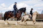 Endurance Riding XII