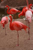 flamingo by SStocker