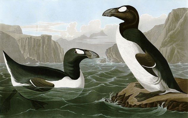 Great Auk Pinguinus Impennis by Playboy1204