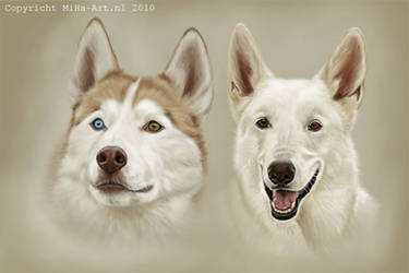 White Shepherd and Husky