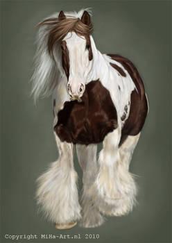 Gypsy horse stallion