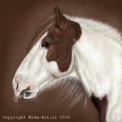 gypsy horse stallion potrait