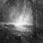 Rain. by BartoZ