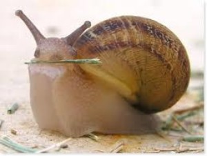 Sir-Snail's Profile Picture