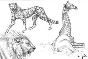 Sketches by FatPug