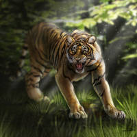 Tiger by FatPug