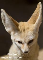 My new foxy friend