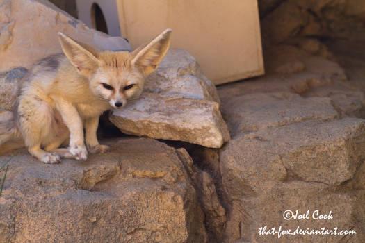 Suspicious Fox is Suspicious