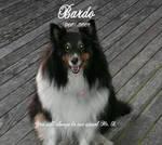 Remembering Bardo