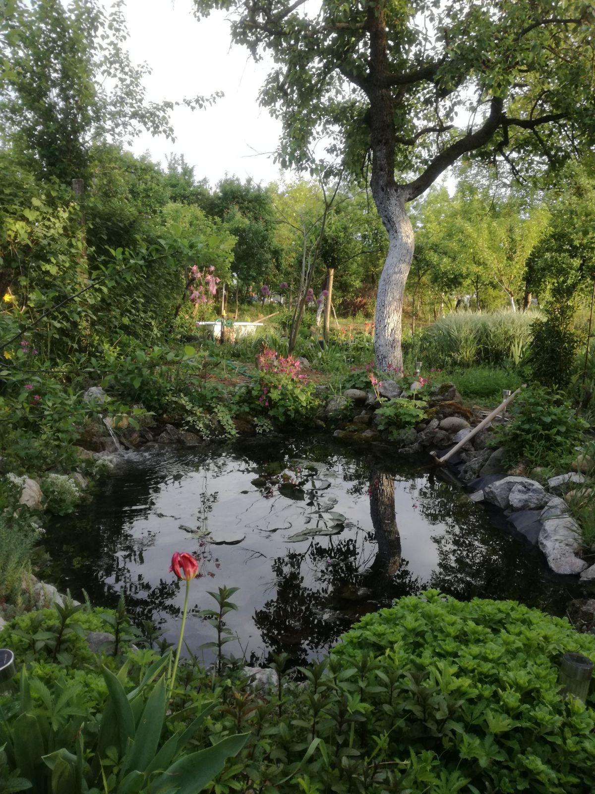 Garden pond by animatm on deviantart for Garden pond reddit