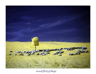 surreal flock of sheeps by mescaline73
