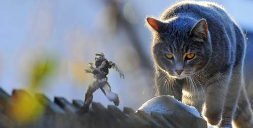 Halo vs Cat - Part 2