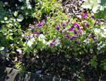 Stock :-: Garden I