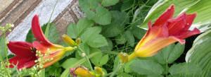 Stock :-: Garden II
