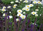 Stock :-: Garden V