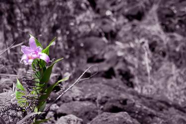 Flower by joeross