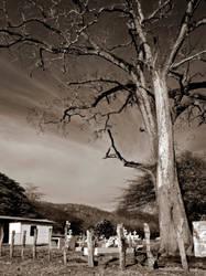 The Grim Tree by joeross